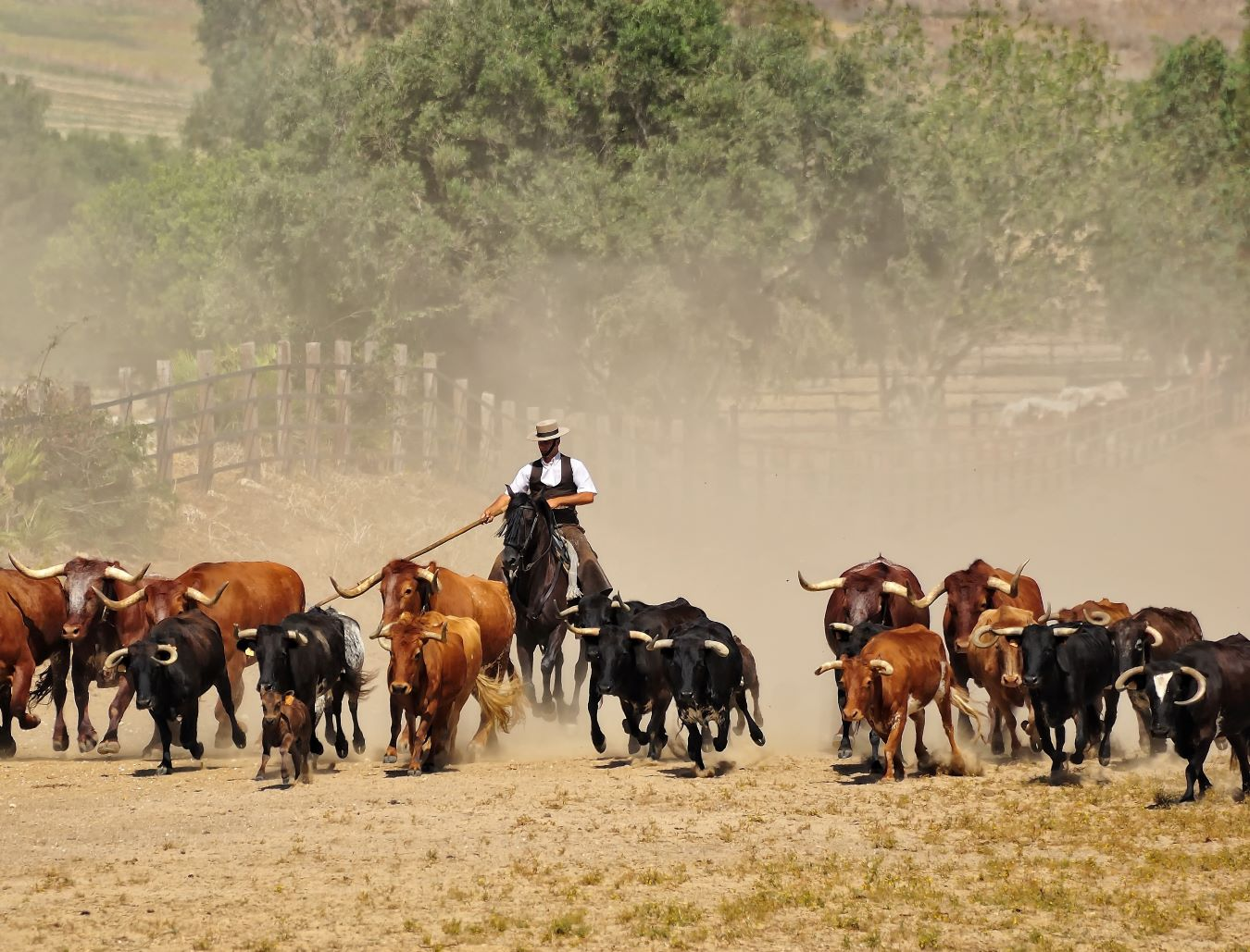 la Ruta del Toro: gandería de toros bravos.
